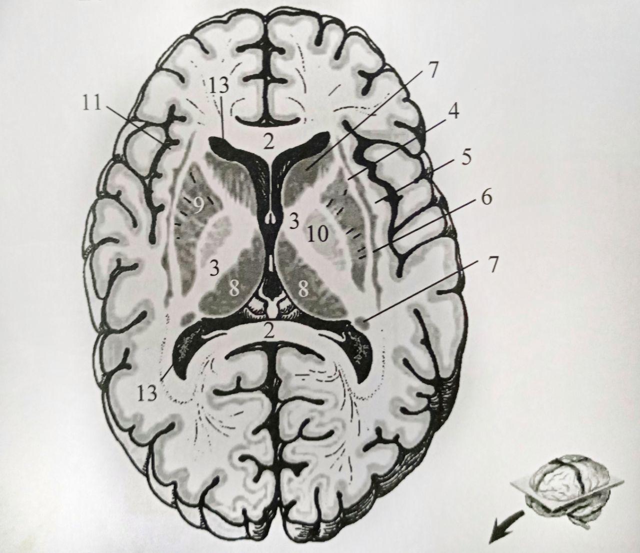 В голове